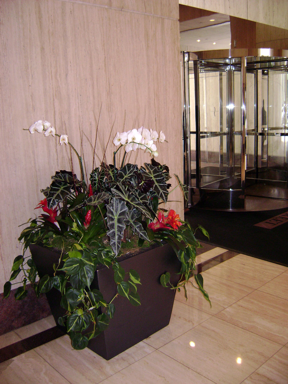 Color rotation for commercial interior plant care