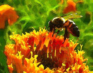 Bees&Flower