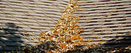 Dry leaves on roof - they are a fire hazard