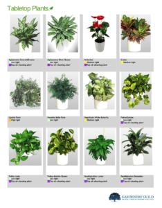 GGI Interior Plant Catalog